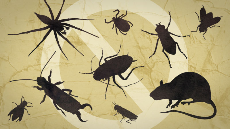 The Best Ways to Keep your Home Free from Pests